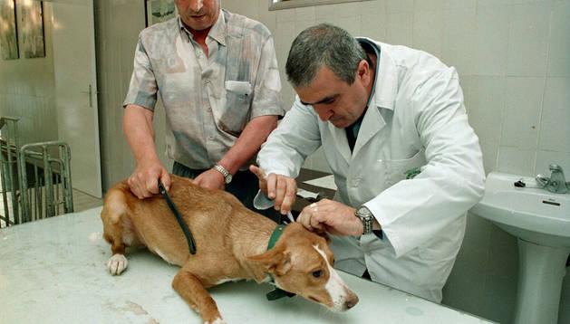 Campaña de vacunación canina en pamplona.