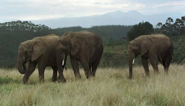Elefantes huérfanos en el Parque Nacional de Kenia