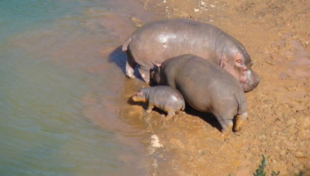Kavango, Pepa y su cría