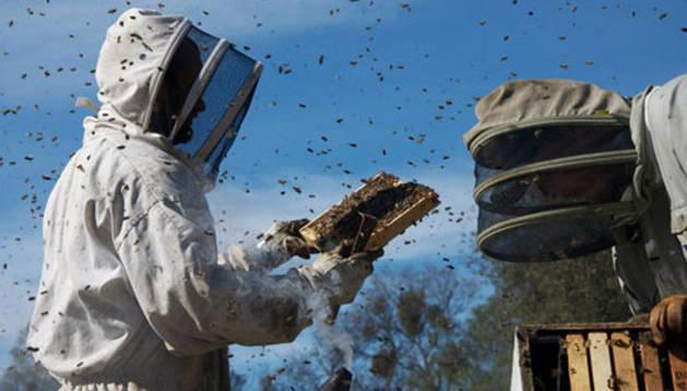 Dos apicultores en una colmena