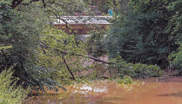 Imagen del chopo caído sobre el río Ega.