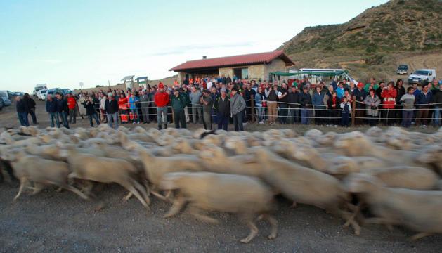 Asistentes a la entrada del ganado a Bardenas que tuvo lugar el 18 de septiembre de 2013.