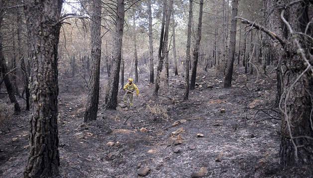 Un  operario trabaja en las labores de extinción del incendio que afecta a la Sierra Norte de Guadalajara