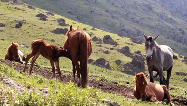El SEPRONA calcula que 2.000 caballos podrían haber sido robados y sacrificados de manera irregular en León