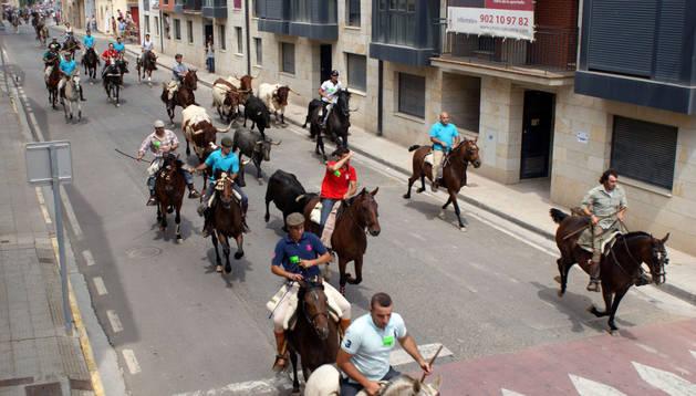 Caballistas conducen el ganado por una de las calles de Cascante por las que transcurrió la trashumancia.