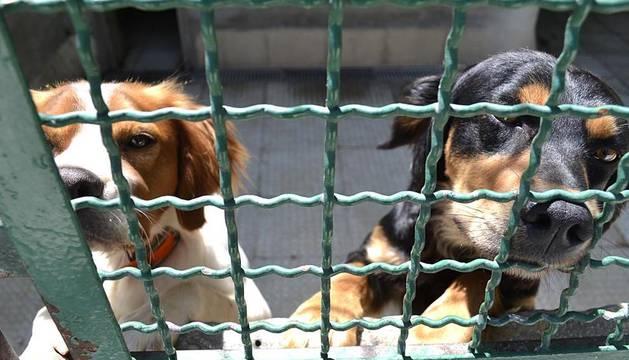 Los perros y gatos del Centro de Atención a Animales de la capital navarra esperan con paciencia su adopción. Mientras, dan la bienvenida con sus ladridos y maullidos a los visitantes, que pueden acariciarlos.