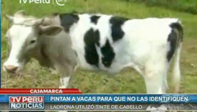 La vaca pintada