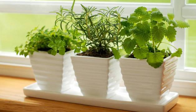 En el 70 % de los casos, el exceso de riego es precisamente el causante de la muerte de las plantas.