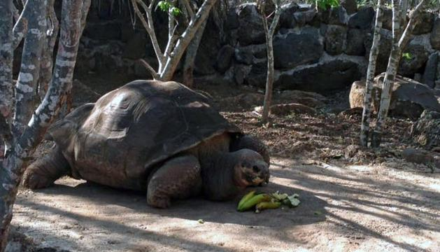 La tortuga gigante Pepe el Misionero
