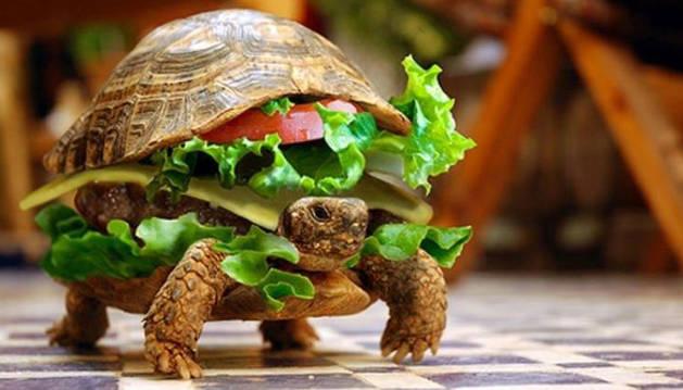 La tortuga 'transformada' en hamburguesa