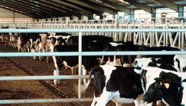 El sector lácteo puede recibir ayudas de la UE debido al veto ruso.