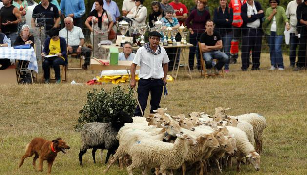 Campeonato de perros pastor en Uharte Arakil