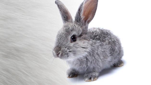 Uno de los conejos que ilustran la campaña de la ONG Igualdad Animal