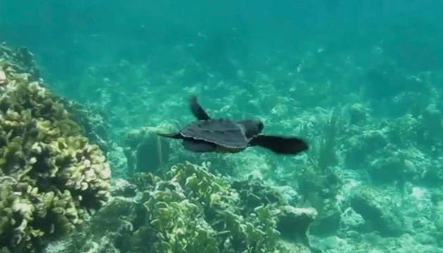 Una de las pequeñas tortugas que aparecían en el videoclip