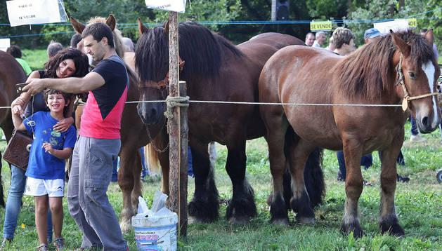 Una familia se fotografía junto a varios ejemplares de caballos de raza burguete.