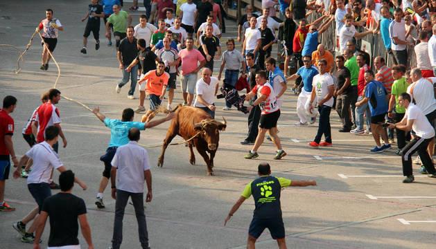 Cientos de aficionados acudieron a la plaza de la Cruz para presenciar la novena salida del toro con soga.