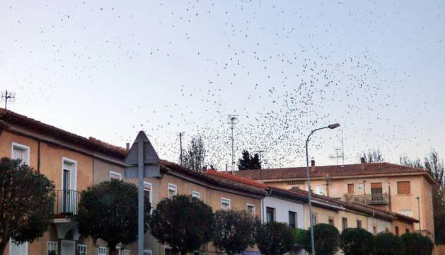 Una bandada de estorninos atraviesa casas del barrio de Lourdes.