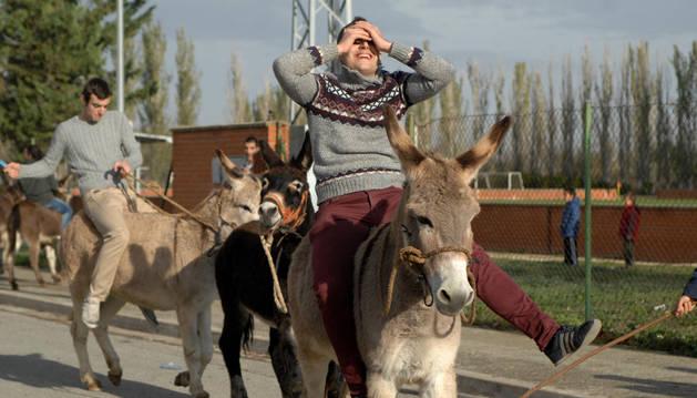 Burros y caballos protagonizan las fiestas de invierno de Falces