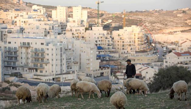Un pastor palestino con sus ovejas, en el este de Jerusalén, en donde Israel destruirá viviendas.