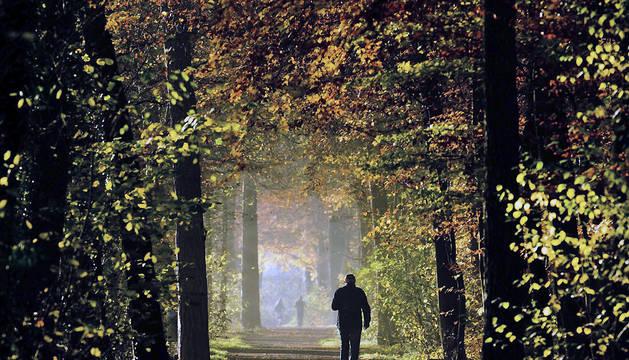 Una persona pasea en un paisaje otoñal