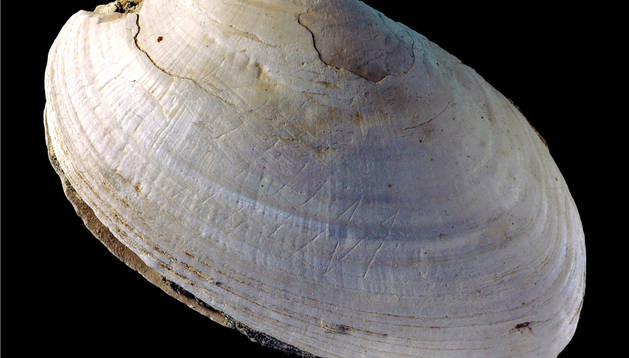 El Homo Erectus grababa sobre mejillones hace medio millón de años