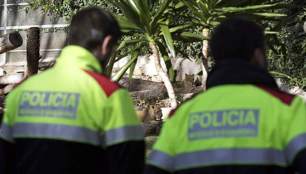 Dos policías municipales en el recinto de los leones, después del ataque
