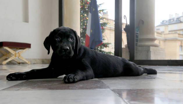La nueva mascota de Hollande