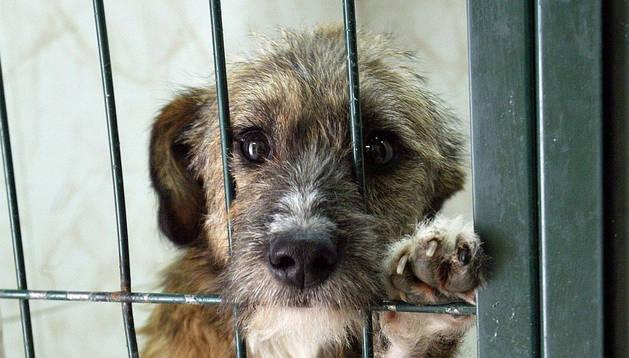 En España se abandonan 150.000 animales al año