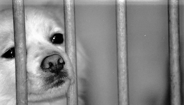 Un perro en la protectora de animales