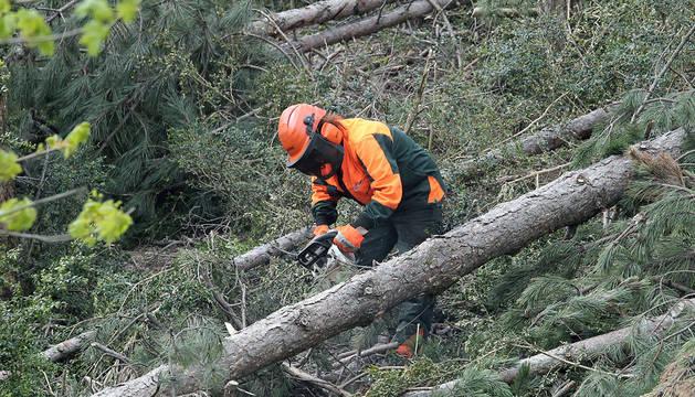 Trabajos forestales en el monte Ezcaba.