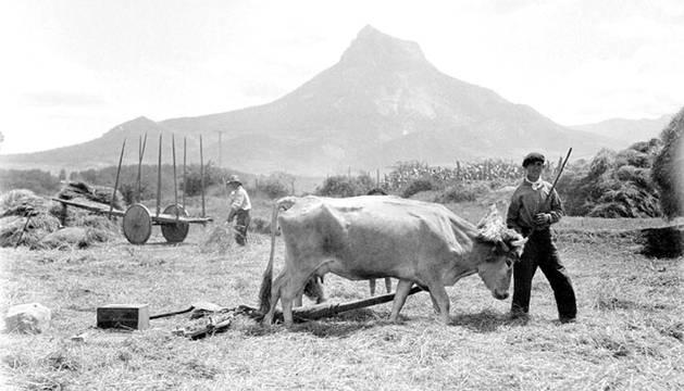 La trilla en Etxarri-Aranatz.
