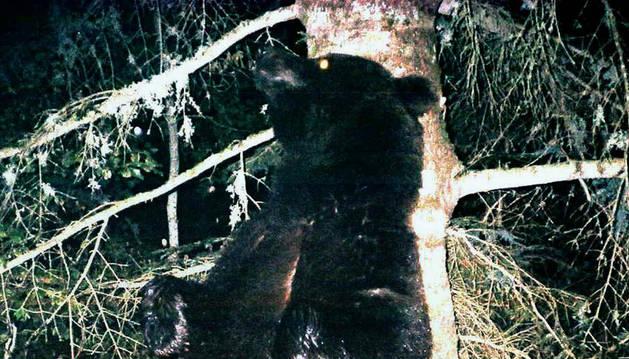 El oso 'Neré'