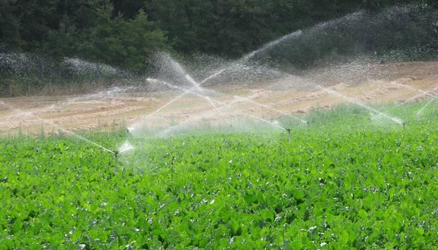 Una de cada diez hectáreas de la primera fase del Canal no se cultiva