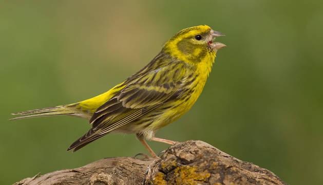 Dos aves que están en declive se mudan a las ciudades