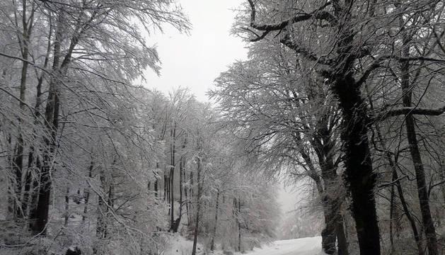 Nieve en Navarra este martes, 24 de febrero