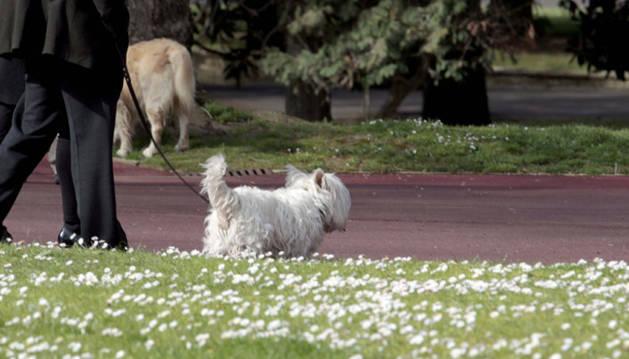 Un perro pasea por un jardín