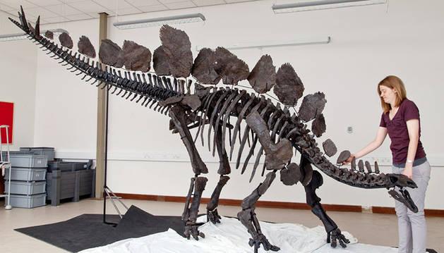 Estegosaurio del Museo de Historia Natural de Londres.