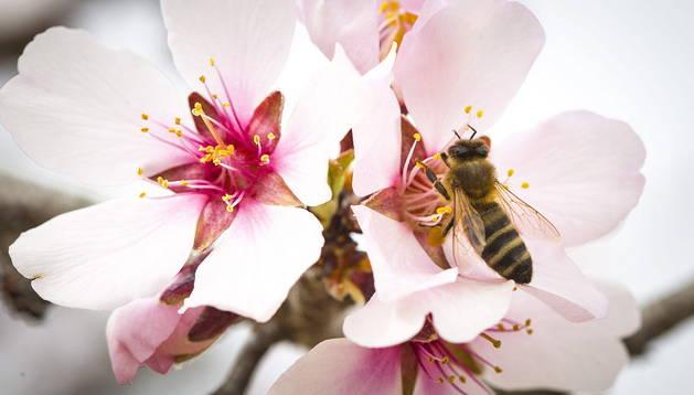 Los niveles de polen en Pamplona, disponibles en el móvil o el ordenador
