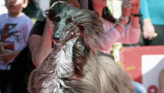 Uno de los perros presentes en la competición