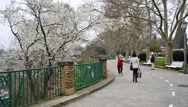 La primavera se prevé 'moderada' para los alérgicos al polen, a expensas del tiempo
