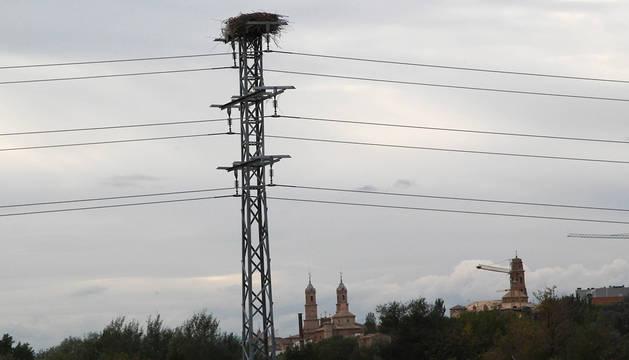 Postes de luz con nidos de cigüeñas cerca de Corella.