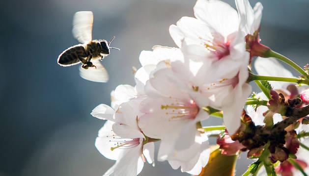 La alergia al polen afecta a un 10 por ciento de la población en algún momento de su vida.