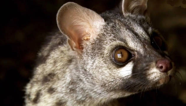 La biodiversidad ibérica llega al Museo de Educación Ambiental
