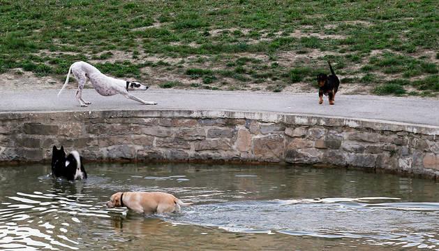 Varios perros sueltos en la Vuelta del Castillo.