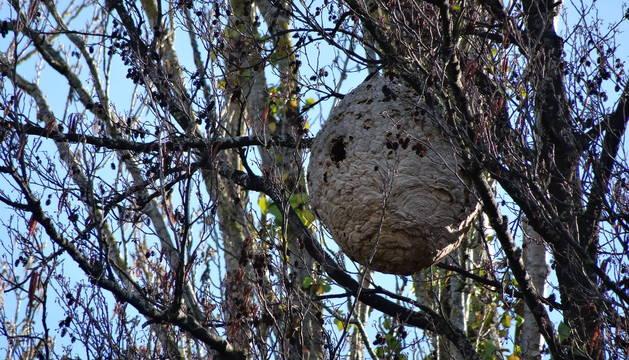 Imagen del nido, a 50 metros del Club Natación.