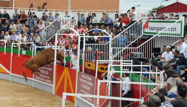 Una vaca salta la barrera en un espectáculo en la plaza portátil.