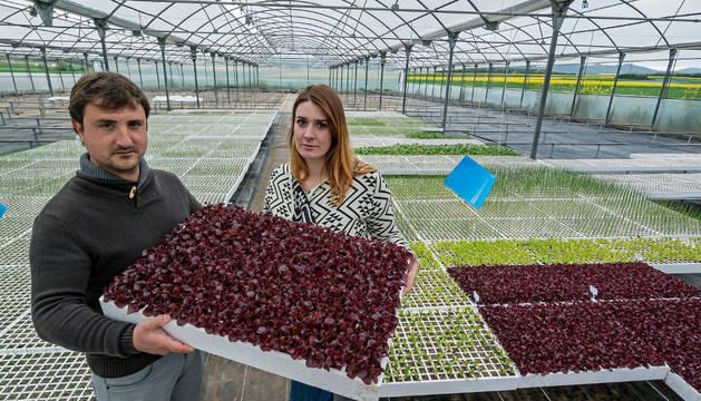 Ion Korres y Clara Yus, el interior del invernadero donde se realiza el proceso de crecimiento de la planta desde la germinación.