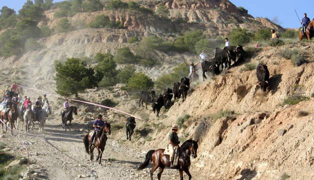 Varias vacas bajan desde el monte en la traída en la que fueron guiadas por unos 40 jinetes.