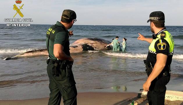 Imagen de la ballena de seis toneladas de peso y diez metros de largo varada en una playa  de Cullera (Valencia).