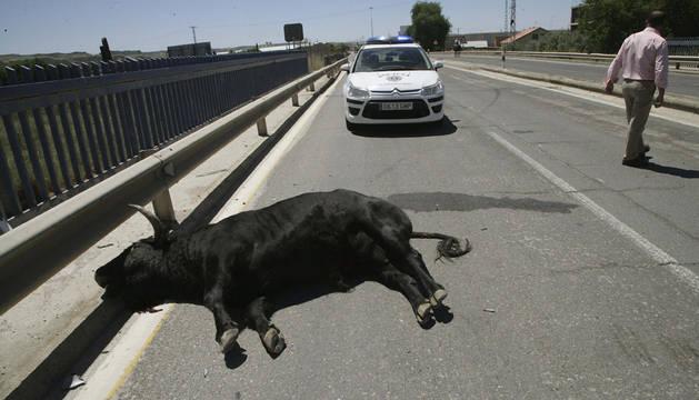 El toro, tras ser atropellado en Talavera.